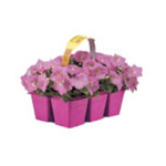 Wave Petunias Trademark Pink Packaging