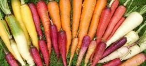A Rainbow Of Carrots