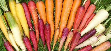 A Rainbow Of Carrots