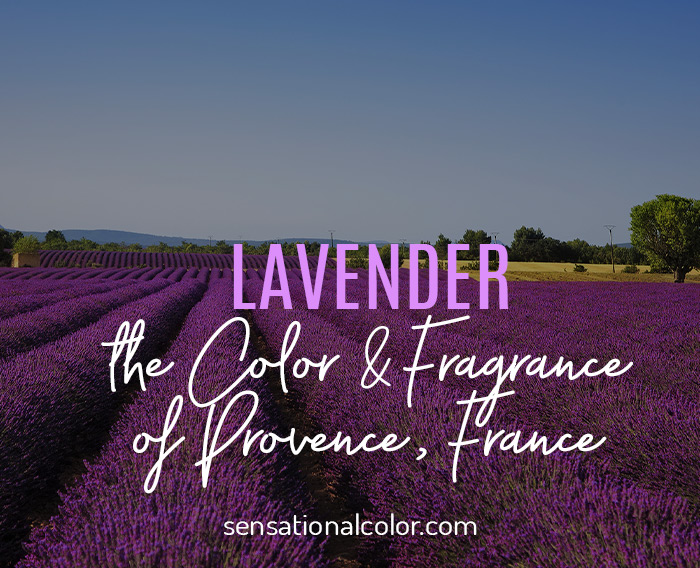 Lavender the Color of Provence France
