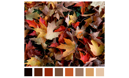 Fall Color Scheme Leaves