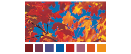 Fall Color Scheme Leaves Against Blue Sky