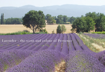 France | Lavender -- The Color and Scent of Provence