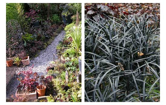 Examples of black plants from Karen Platt's Book Black Magic and Purple Passion