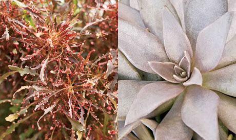 Flowers with a metallic look from Proven Winners