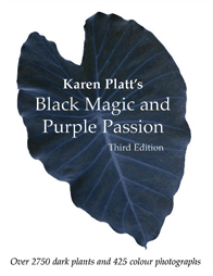 Black-Magic and Purple Passion