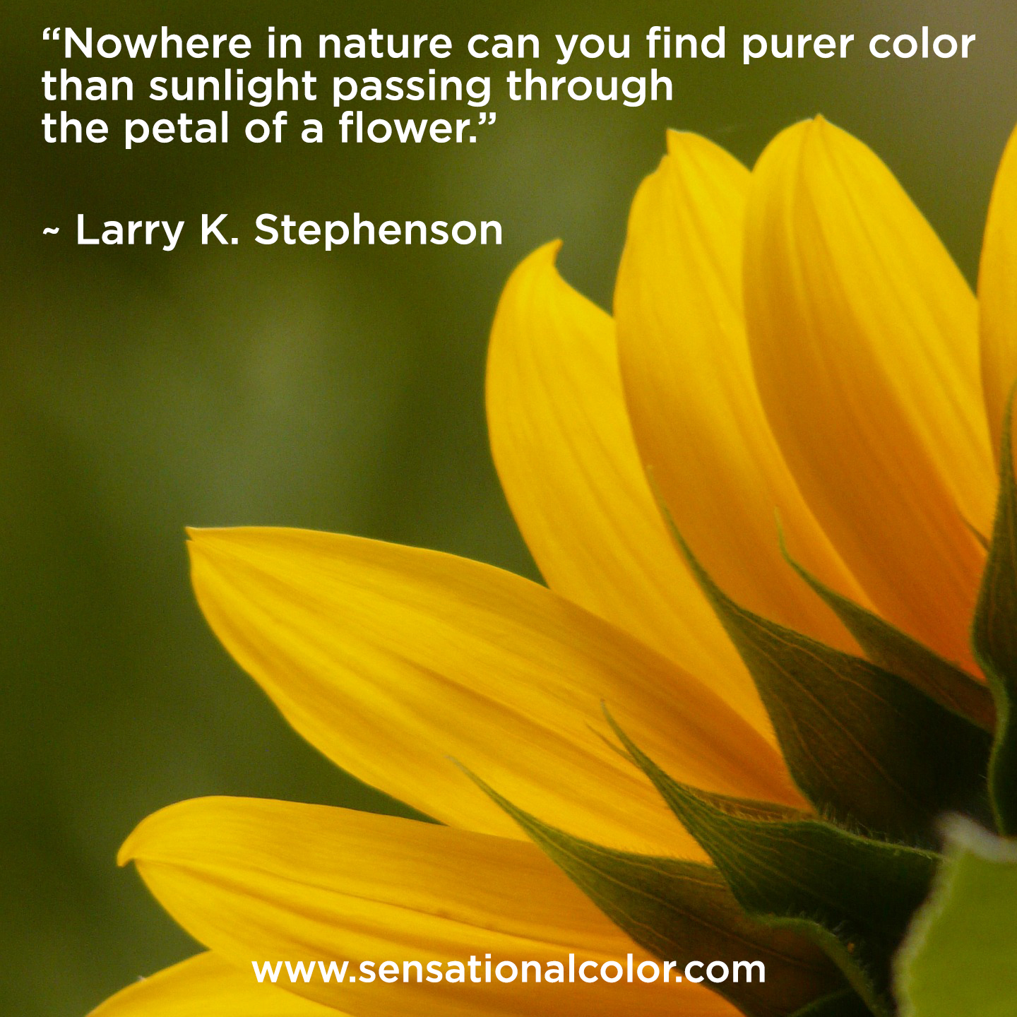 "Quotes About Color - ""Nowhere in nature can you find purer color than sunlight passing through the petal of a flower."" ~ Larry K. Stephenson"