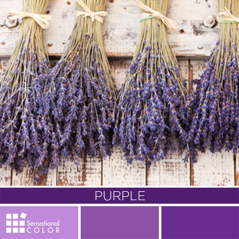 Purple Color Palette Sensational Color
