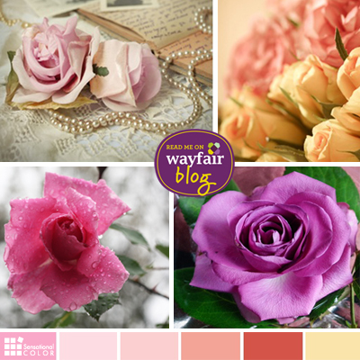 The Color Meaning of Roses