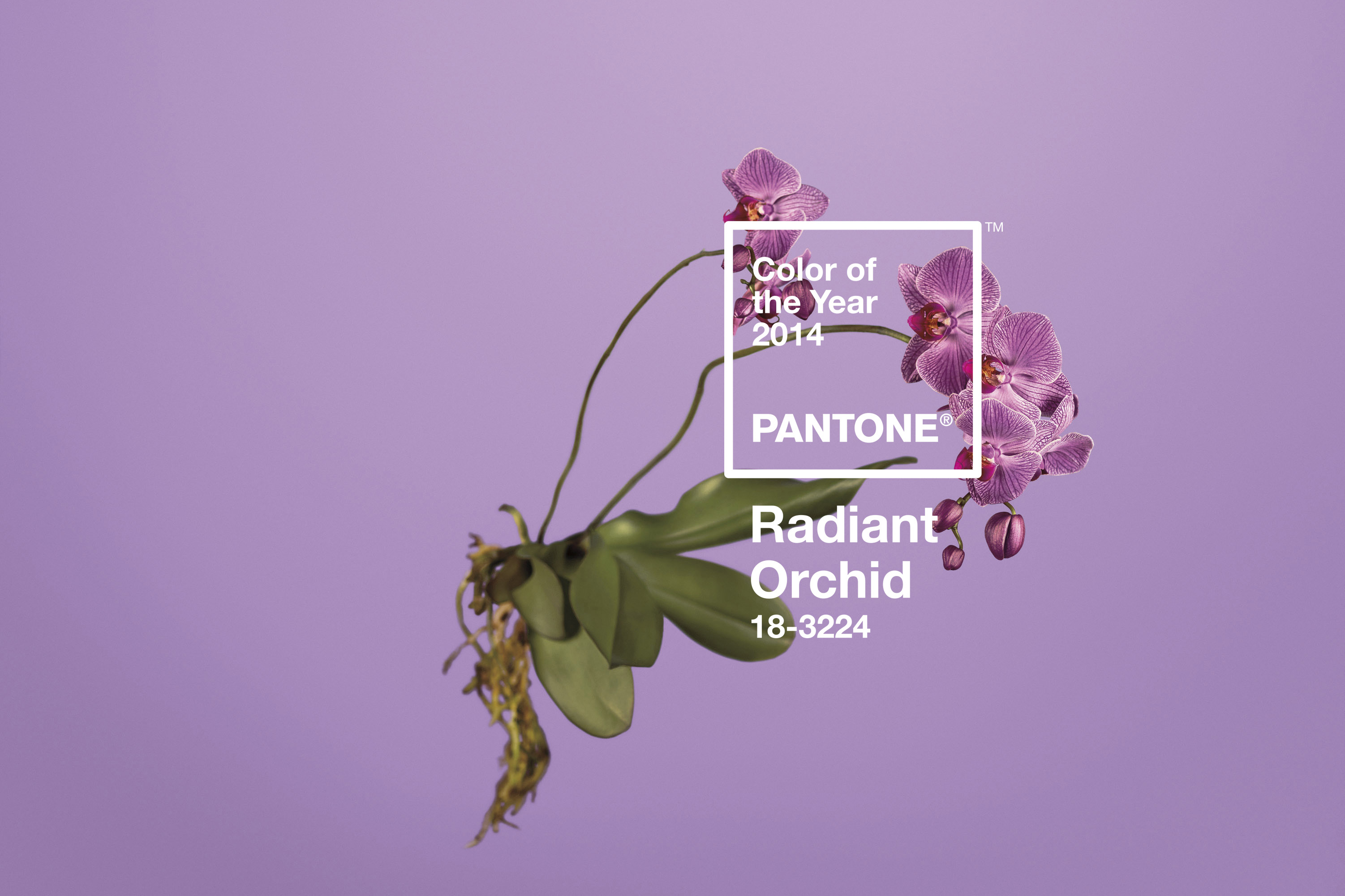 Radiant Orchid Pantone 18-3224-600