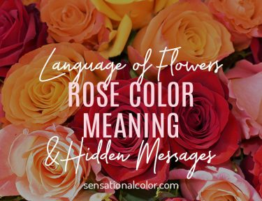 Rose Color Meaning