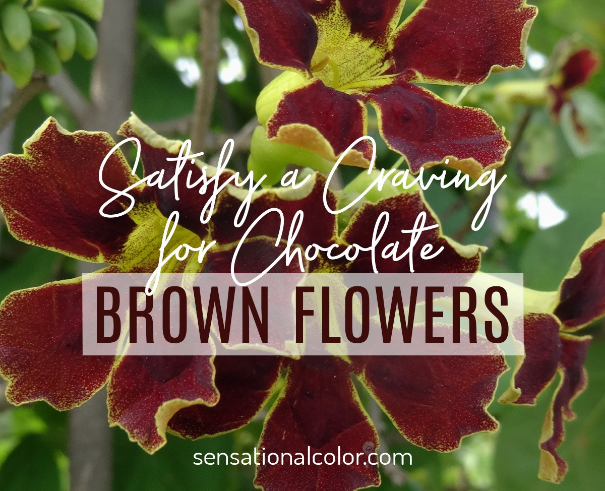 Chocolate Brown Flowers